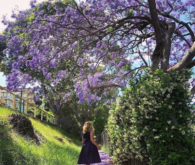 Let's take a moment and appreciate all the magical jacarandas blooming at the moment. 💜 @myluckybackyard