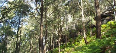 Narrabeen Slopes Forest