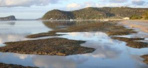 Seagrass meadow on Pittwater with Barrenjoey lighthouse in background