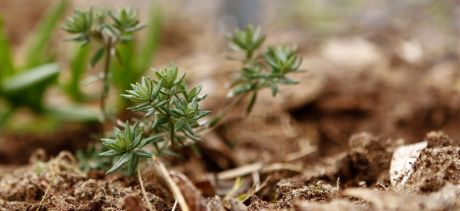Close up of plant and soil